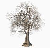 Död tree som isoleras på vit bakgrund stock illustrationer