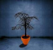 död växande tree Royaltyfri Bild