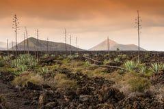 Död vulkanisk landTimanfaya nationalpark, Lanzarote Arkivbilder