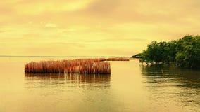Döda bambu planteras i havet Royaltyfria Bilder