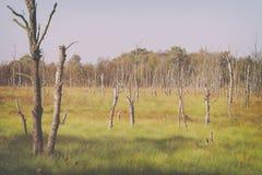 Döda björkträd - hed royaltyfri fotografi