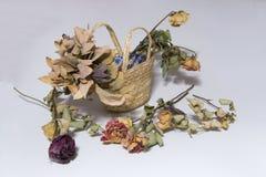 Döda blommor Arkivbild