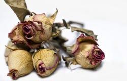 Döda blommor Royaltyfri Fotografi