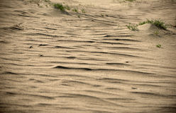Döda dyn i Neringa, Litauen Arkivfoto
