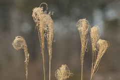 Döda gräsormbunksblad Royaltyfria Bilder