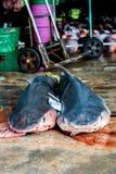 Döda hajar Royaltyfria Foton