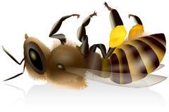 Döda Honey Bee Arkivbild