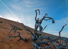 Döda Joshua Tree Cloudscape på solnedgången i Palmdale Kalifornien CA arkivfoto
