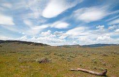 Döda journal och Rolling Hills under linsformad cloudscape för cirrusmoln i den nordliga Yellowstone nationalparken i Wyoming För Royaltyfri Foto