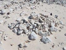 döda koraller Royaltyfria Bilder