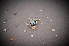 Döda krabbor Royaltyfria Bilder