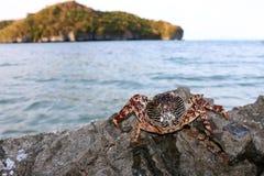 Döda krabbor på vaggar Arkivbild