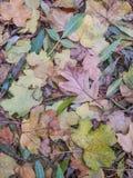 Döda kulöra blad, bakgrund Arkivbilder