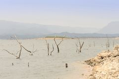 döda laketrees Fotografering för Bildbyråer