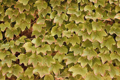 döda leaves Royaltyfri Fotografi