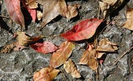 döda leaves Royaltyfria Bilder