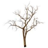Döda och torrt träd royaltyfri foto
