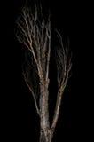 Döda och torrt träd som isoleras på svart Arkivbild