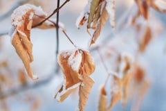 Döda sidor i snön mot inställningssolen en försiktig vintersolnedgång Royaltyfria Bilder