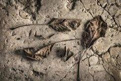 Döda sidor på en förberedande sten för gammal sten Arkivfoton