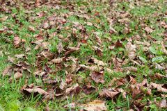 Döda sidor på gräs Arkivbilder