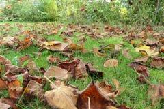Döda sidor på gräs Arkivfoto