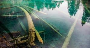 döda switzerland för blausee trees Royaltyfri Bild