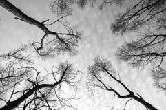 Döda träd Arkivfoto