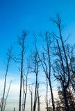 Döda träd Fotografering för Bildbyråer