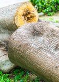 Döda träd Arkivfoton