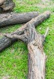 Döda träd Royaltyfri Bild