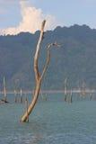 Döda träd bland vatten i den blåa sjön Royaltyfri Fotografi