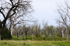 Döda träd blandade med levande träd i ett fält i South Dakota royaltyfria foton