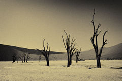 Döda träd i berömda Deadvlei Arkivbild