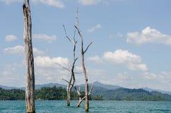 Döda träd i den Ratchaprapha fördämningen royaltyfri bild