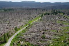 Döda träd i den Sumava nationalparken Arkivfoton