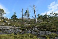 Döda träd i en Forest Park, Co Donegal Irland royaltyfria bilder