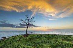 Döda träd i ett hav av ljus skymning Vågen slogg vaggadimman fördunklade vattenstenen exponeringsskymningen i havet härlig se royaltyfri fotografi