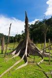 Döda träd i fördämningområde, Thailand arkivbilder