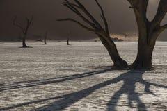Döda träd i mitt av Namibiaet deserterar Fotografering för Bildbyråer