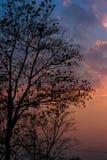 Döda träd i solen skiner i aftonen Arkivfoton