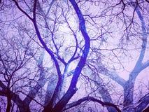 Döda träd med mystiska skuggor i ljus - lilor färgar Royaltyfri Foto