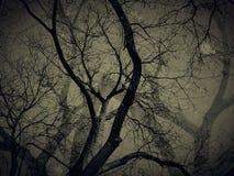 Döda träd med skuggor i tappningstilsikt - karaktärsteckningen och grunge avbildar tekniker Arkivfoton