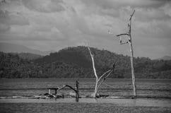 Döda träd och avfallet i den Ratchaprapha fördämningen royaltyfria bilder