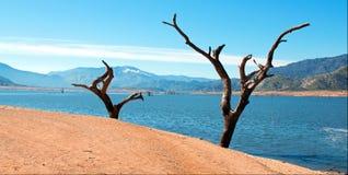 Döda träd och stammar längs bankerna av Kern River var det skriver in torkan slågna sjön Isabella California CA royaltyfri foto