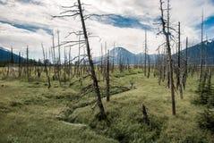 Döda träd på alpint änglandskap Arkivbild