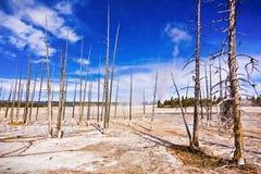 Döda träd på högt geotermisk terräng Arkivfoton
