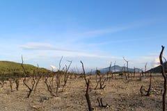 Döda träd på maximumet av berget arkivfoton
