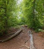 Döda träd på skogen Arkivbild