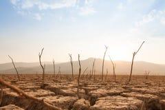 Döda träd på torka och sprucket land på den torra floden eller sjön royaltyfri foto